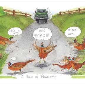 Alisons Animals - A Panic of Pheasants