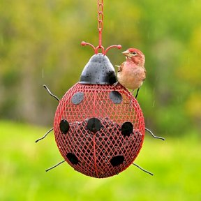 Lady Bug Mesh Feeder