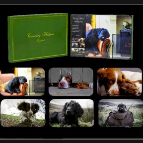 Country Matters Working Dogs Placemats - Set of 6