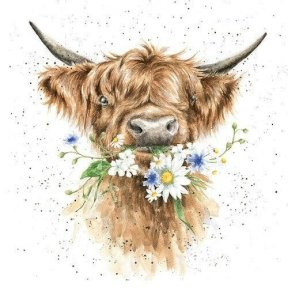 Wrendale Country Set 'Daisy Coo' Highland Cow Card