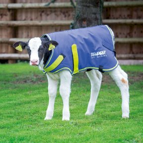 Tempest Original Calf Turnout Coat